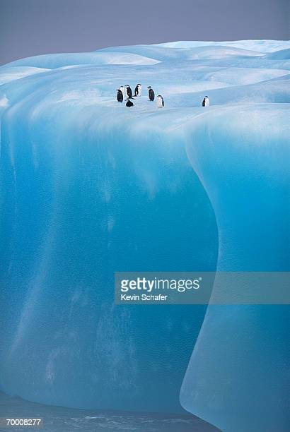 Antarctica, Weddell Sea, chinstrap penguins resting on blue iceberg
