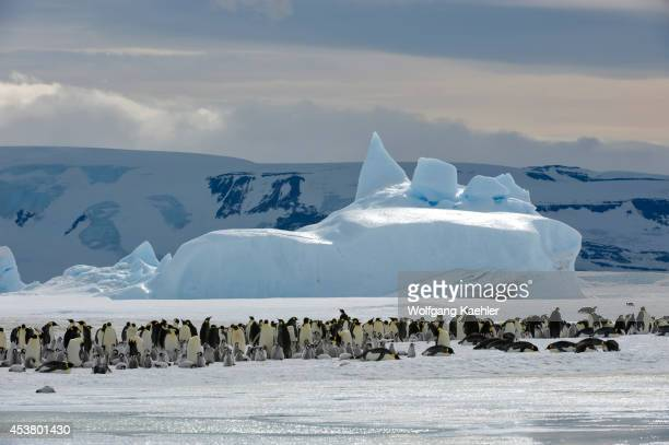 Antarctica Weddell Sea Snow Hill Island Emperor Penguin Colony Aptenodytes forsteri On Fast Ice