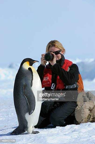 Antarctica Weddell Sea Snow Hill Island Emperor Penguin Colony Aptenodytes forsteri Tourist With Penguin