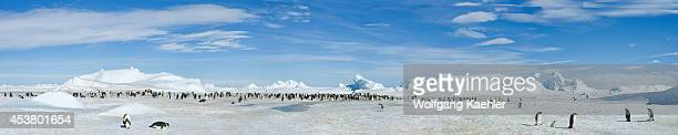 Antarctica Weddell Sea Snow Hill Island Panorama Photo Of Emperor Penguin Colony Aptenodytes forsteri And Icebergs