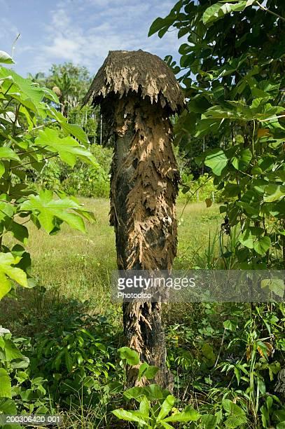 Anthill in bush land