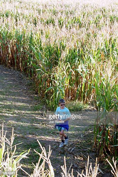 Anthony Jenkins trys to find his way out of the 10 acre cornfield maze October 19 2000 in La Union NM The local farmer who built the maze is one of...