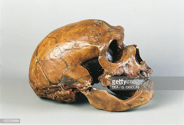 Anthropology Neanderthal man skull From La ChapelleauxSaints France