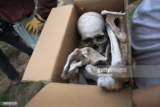 Anthropology students collect bones from a suspected undocumented immigrant scattered on a ranch and found by the US Border Patrol on May 22 2013 in...