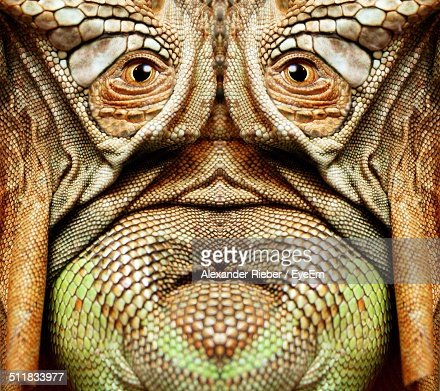 Anthropomorphic face with animal scales