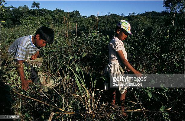 Anti narcotics struggle In Chapare Bolivia In July 1993
