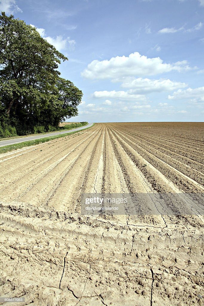 Anticonformism / Furrow : Stock Photo