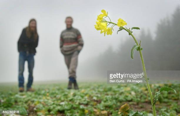 AntiGM crop protesters Anthony Jackson and Gwilyn Barlow look at a plant at a site near Munlochy on the Black Isle Scotland where AntiGM crop...