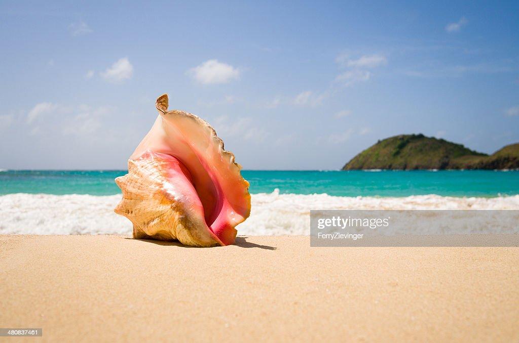 Antigua and Barbuda, Antigua, Queen Conch on sandy beach