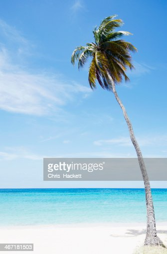 Antigua and Barbuda, Palm tree on beach