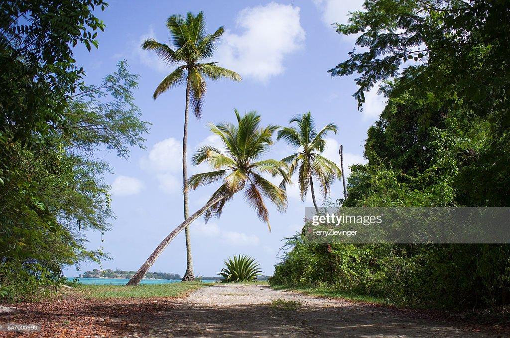 Antigua & Barbuda, Caribbean Sea, Antigua, Palm trees on footpath at sunny day