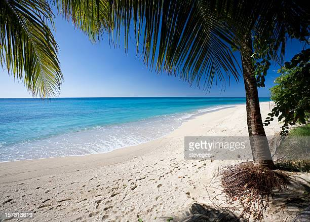 Antigua Beach with Palm Trees