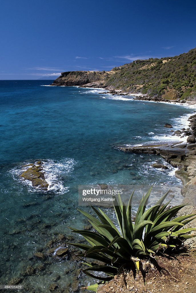 Antigua, Coastline With Century Plant In Foreground.