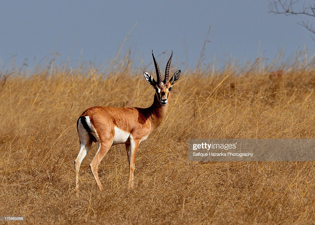 Antilope Landscape