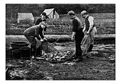 Antique dotprinted photograph of Hobbies and Sports: Fish farming