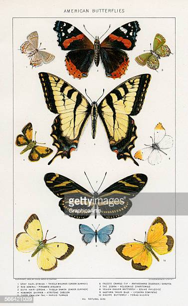 Antique print of American butterflies by Julius Bien lithograph 1879