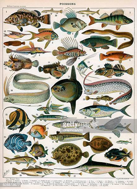 Antique print of 'Poissons' fish varieties by Vignerot Demoulin after Millot color lithograph 1897