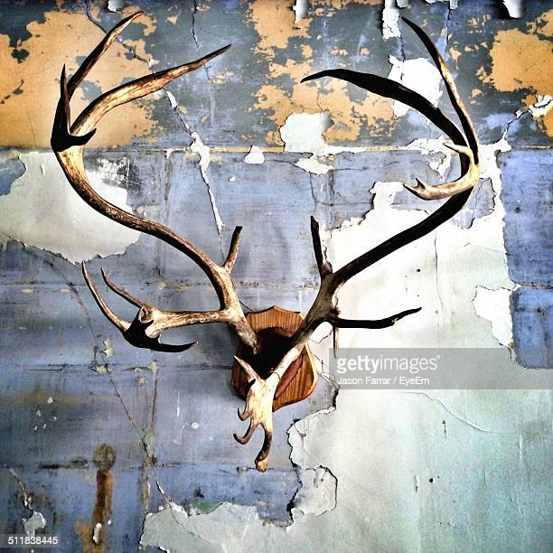 Antler on wall