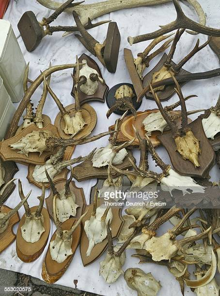 Antlers For Sale At Market Stall