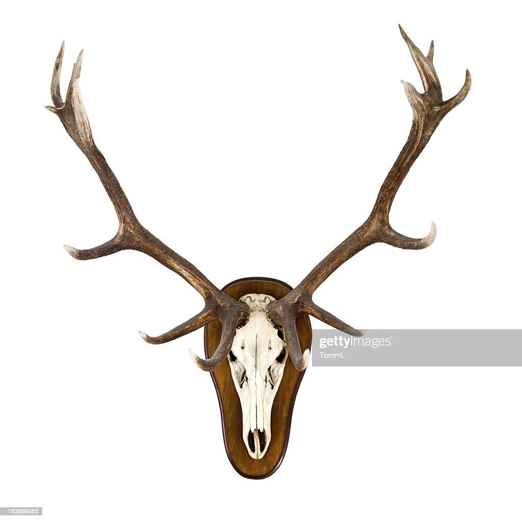 Antlers on a white wall - CLIPPING PATH included