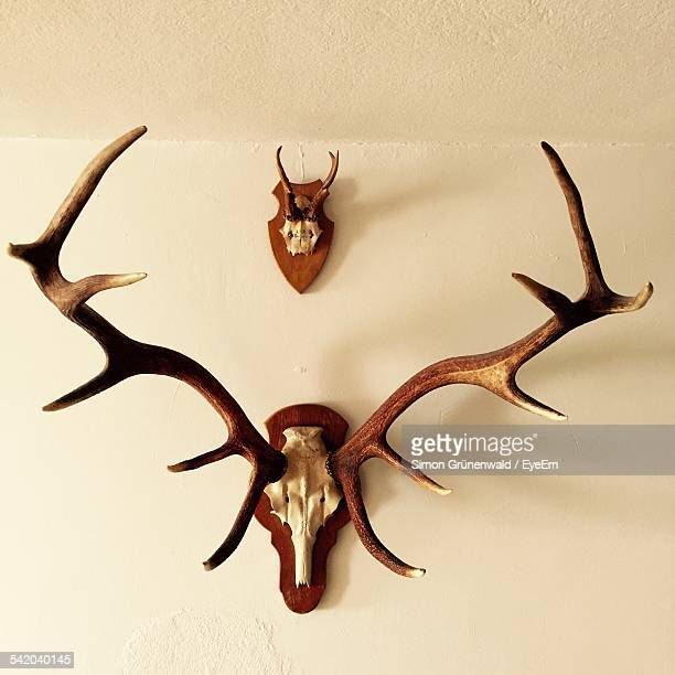 Antlers On Wall