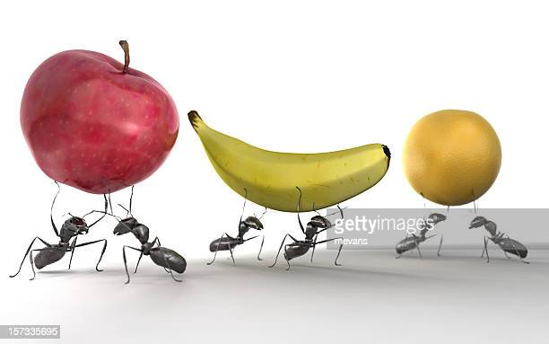 Ants Carrying Fruit