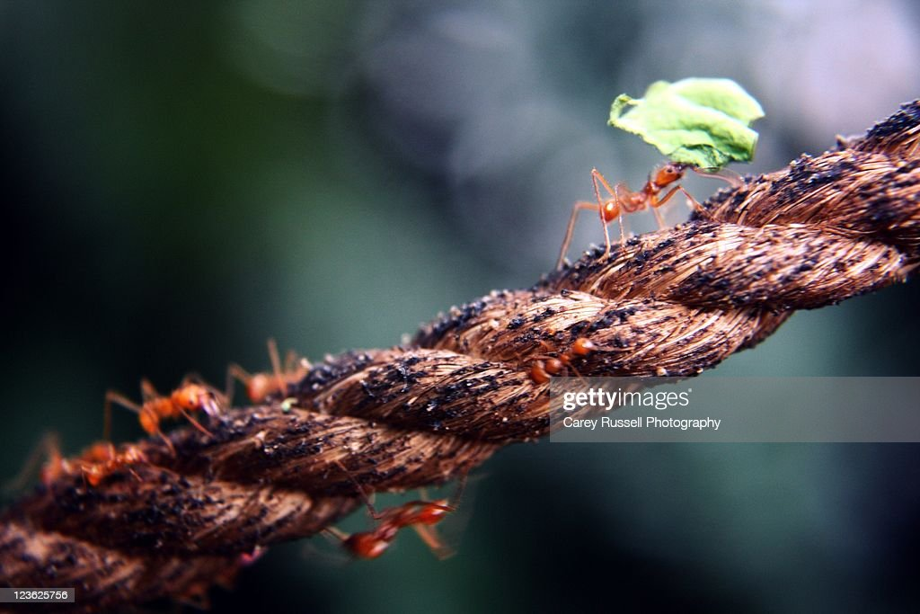 Ants on rope