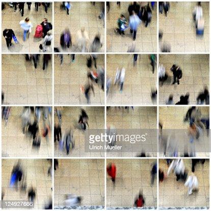 Ants : Bildbanksbilder