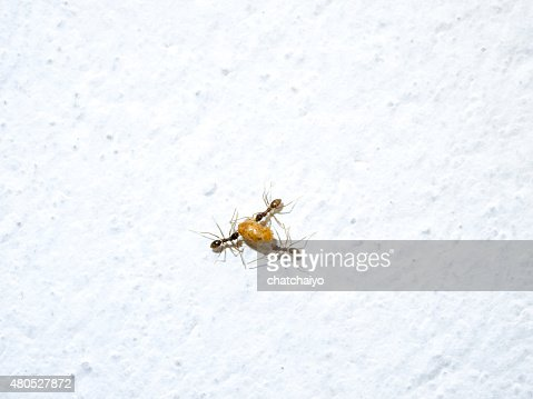 Ants work moving food : Stock Photo