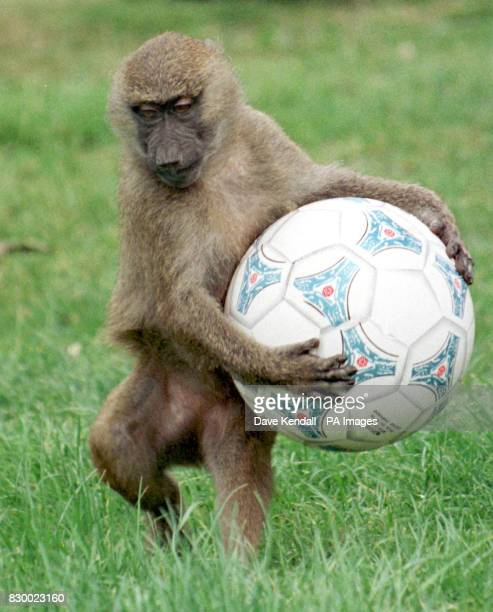 Anyone fancy a kick about With the start of the World Cup getting closer it seems that you just can't get away from football Even the residents of...