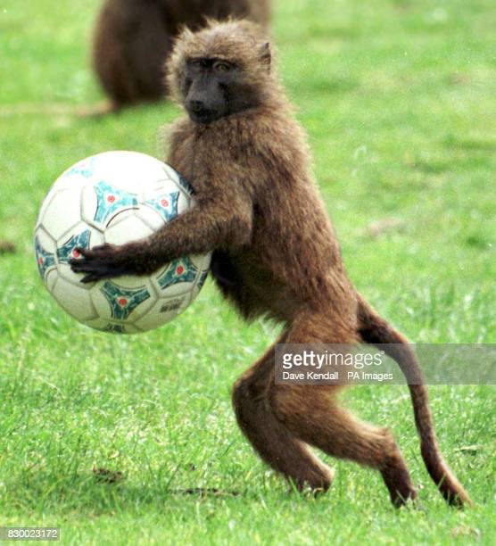 Anyone fancy a kick about With the start of the World Cup getting closer it seems that you just cant get away from football Even the residents of the...