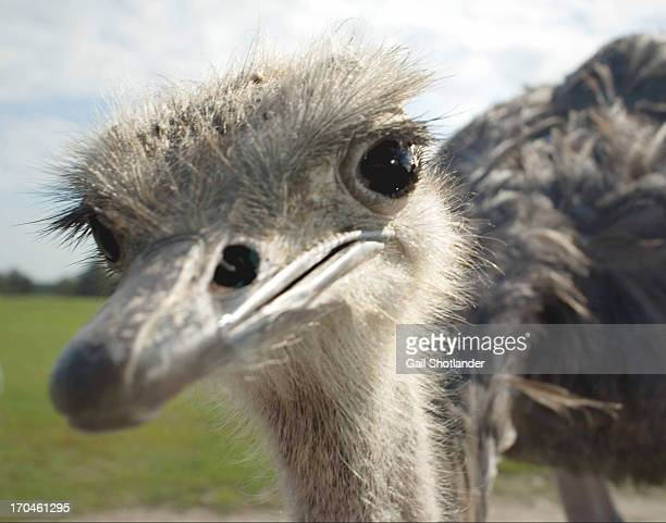 Anyone out there? Emu Face