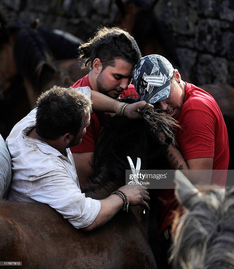 Aoitadores (fighters) shear a wild horse during the Rapa das Bestas (shearing of the beasts) festival on July 2, 2011 in Sabucedo, Spain. Hundreds of wild horses are rounded up from the mountains and trimmed and marked in the corral.