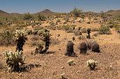 Desert view along the Apache Wash trail of the Phoenix Sonoran Preserve, Phoenix, Arizona, USA