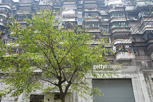 Apartment building and tree, low angle view
