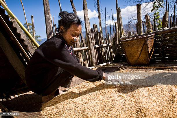 Apatani tribal elder Atta Yadd spreads out to dry recently threshed rice in her village of Hijja Arunachal Pradesh The Apatani tribe are one of...