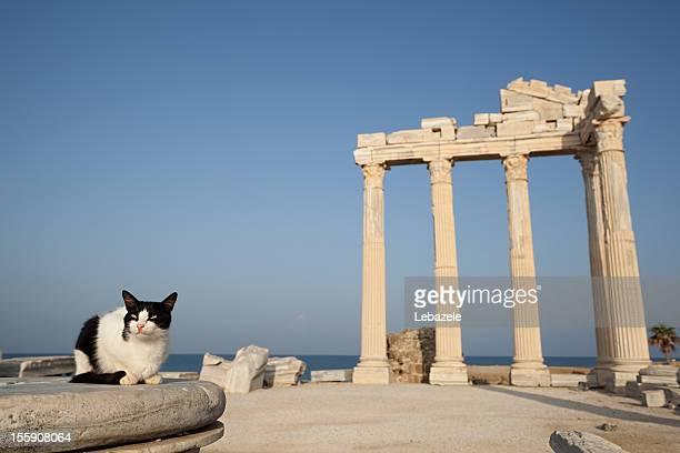 Lato Tempio di cavallo della sala Apollon (Turchia)