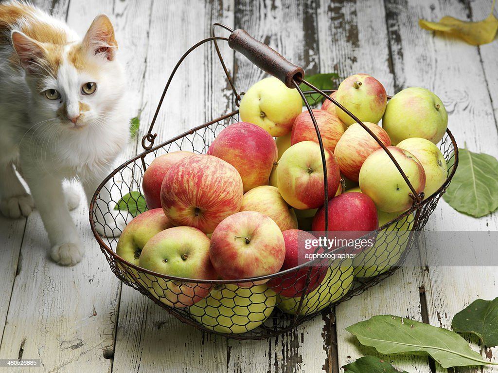 apple basket and cat : Stock Photo