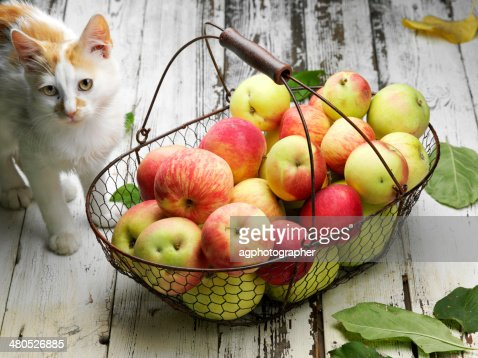 apple basket and cat : Stockfoto
