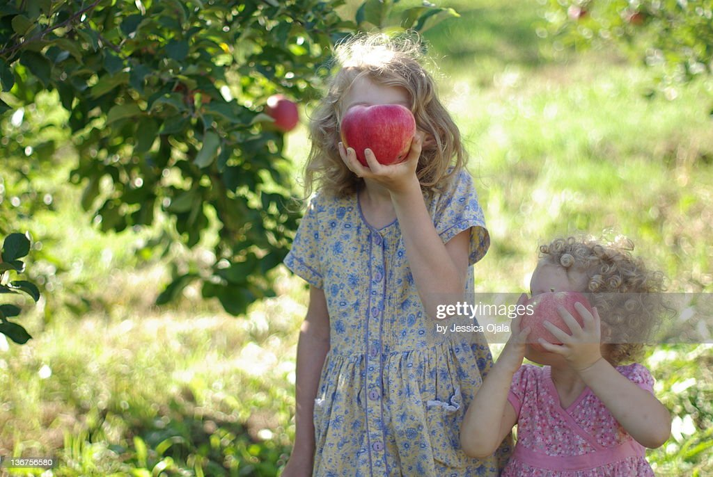 Apple picking : Stock Photo