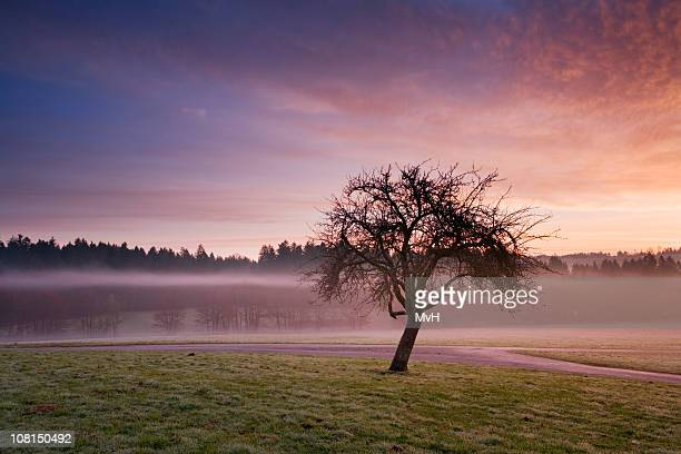 Apple Tree at Sunrise Near Water