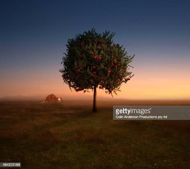 Apple tree growing in rural field