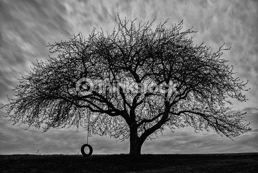 Apple Tree Tire Swing Black And White Photography ...