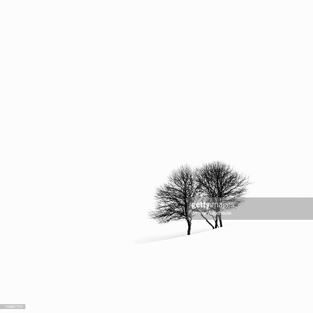 Apple trees in a snowy landscape : Stock Photo