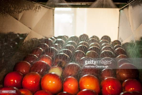 apples-are-washed-prior-to-being-pressed-into-apple-cider-at-fruit ...