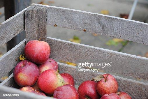 Manzanas en una canasta con ladybugs : Foto de stock