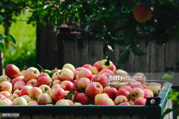 Apples In Container At Yard