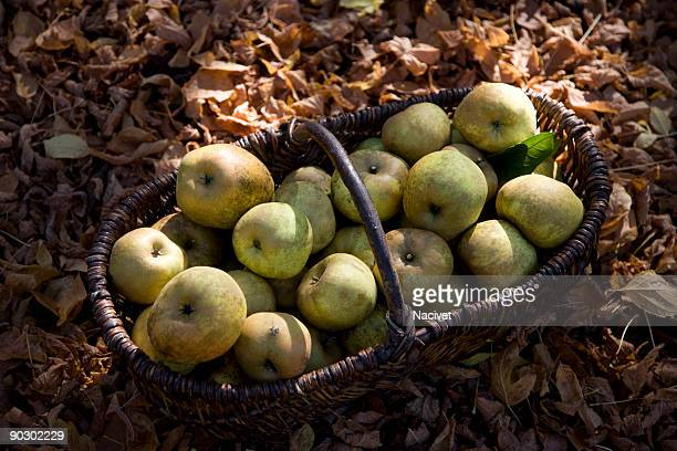 Apples in the basket with dried leaves around