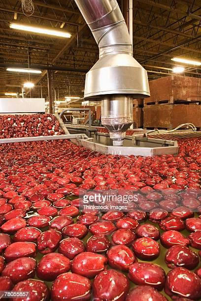 Apples in vat
