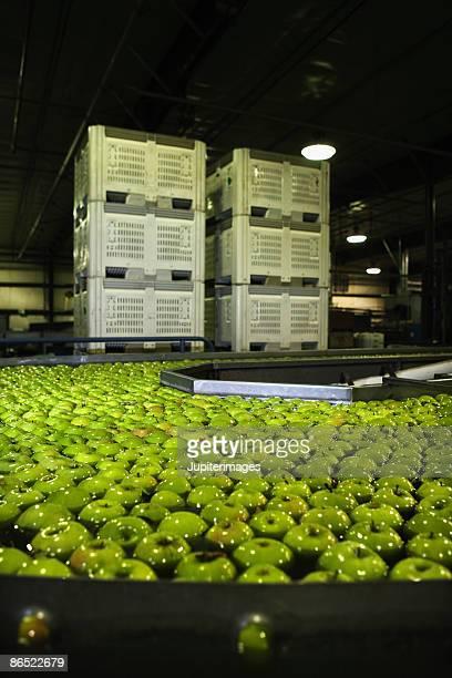 Apples in water on conveyor belt